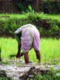 Besetzter Landwirt Stockfotografie