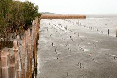 Besichtigung an Knall-PU-Küste in Samut Prakarn, Thailand Lizenzfreie Stockbilder