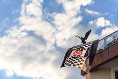 Besiktas sporta drużyny turecka flaga z orła symbolem drużyna na balkonie po tym jak mistrzostwo drużyna w Marmaris, Turcja obraz stock