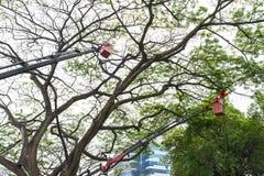 Beskära för träd Arkivbild