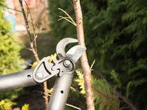 Beskära för vår av treesn fotografering för bildbyråer