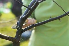 beskära fjädertrees för äpple Arkivfoton
