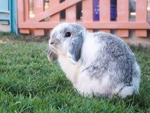 Beskära kanin Arkivbilder
