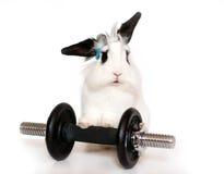 Beskära kanin och en vikt Arkivbilder