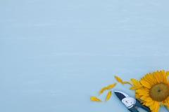 Beskära sax med solrosen på blått Royaltyfri Fotografi