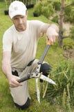 Beskära växter tätt upp Yrkesmässiga trädgårdsmästarePruning barrträd Royaltyfria Foton