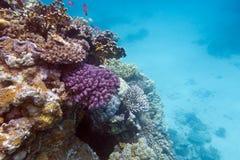 Beskåda av korallreven med hårda koraller som är längst ner av det röda havet Arkivfoton