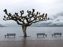 Beskåda av laken Maggiore i Ascona Arkivbilder