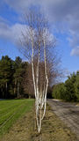 Beskåda av skogar, sätter in, och slättar tyglar polskt Arkivbilder