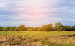 Beskåda cornfielden på atmosfären av det skördade fältet Arkivfoto
