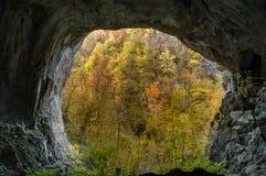 Beskåda från inre en grotta som ut ser till höstskogen Royaltyfri Foto