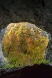 Beskåda från inre en grotta som ut ser till höstskogen Royaltyfri Fotografi