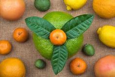 Beskåda från ovannämnt på det hela citrusfruktsortimentet Arkivbild