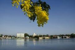 Beskåda landskapet och flodstranden med det guld- duschblommaträdet på den Mae klongfloden royaltyfria foton