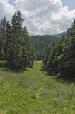 Beskåda in mot sportmitt i pinjeskogen Arkivfoton
