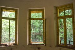 Beskåda skogen från inre av det övergav sjukhuset royaltyfria bilder