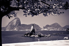 Beskåda av sugarloafen i Rio de Janeiro Royaltyfri Fotografi