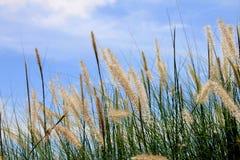 Beskickninggräs Arkivbilder