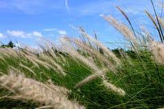 Beskickninggräs Royaltyfria Foton