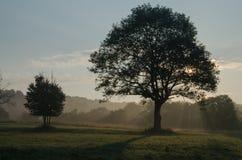 Beskids basso, albero immagini stock