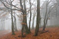 Beskidy山的秋天森林 免版税库存照片