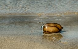 Beskjuta i sanden som tvättas av en våg Arkivbild
