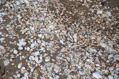 Beskjuter lite bara på stranden i sanden Royaltyfri Foto