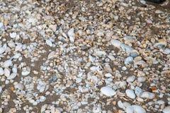 Beskjuter lite bara på stranden i sanden Fotografering för Bildbyråer