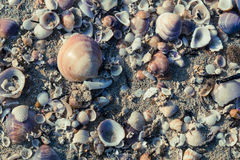 Beskjuter på sanden pink scallop seashell Arkivbild