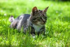 Beskriva av en katt royaltyfri bild