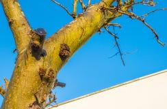 Beskurit fruktträd i en blå himmel i solljus på nedgången fotografering för bildbyråer
