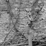 Beskurit träd inga filialer i blommaträdgård royaltyfria foton
