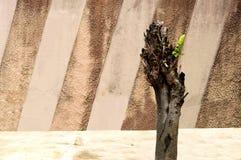 Beskurit träd och väggen arkivfoton