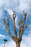 Beskurit träd på en blå himmel med moln arkivfoton