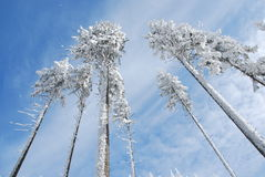 Beskydy winter country. Frozen snowy trees in Winter Beskydy mountains Stock Photography