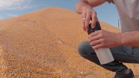 Beslutsamhet av fuktighetsinnehållet av kornavkastning i havre för fältvillkor arkivfilmer