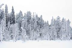 Besneeuwde taiga bomenl Snow covered Taiga trees. Kuusamo; Finland stock image