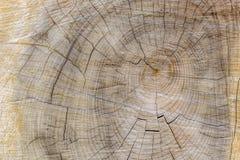 Besnoeiing door boomsectie met ringen en barstenlandschap royalty-vrije stock fotografie