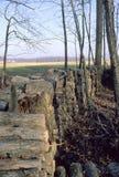 Besnoeiing en gestapeld brandhout royalty-vrije stock fotografie