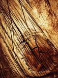 Besnoeiing gekrast hout Stock Foto