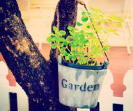 Besnoeiing plantpot Stock Foto