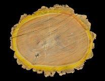 Besnoeiing van cork boom 11 stock foto