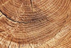 Besnoeiing van een boom stock foto