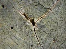 Besnoeiing van een boom royalty-vrije stock afbeeldingen