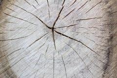 Besnoeiing van een boom met barsten en ringen stock fotografie
