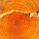 Besnoeiing van een boomstam Stock Fotografie