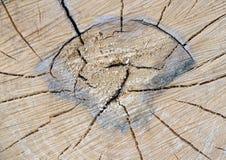 Besnoeiing van een boomstam van een oude boom stock afbeelding