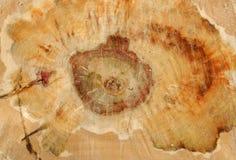 Besnoeiing van een boomstam van een oude boom stock foto