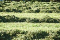 Besnoeiings groen gras Royalty-vrije Stock Foto's