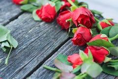 Besnoeiings rode vernietigde rozen donkere achtergrond, bloemen royalty-vrije stock fotografie